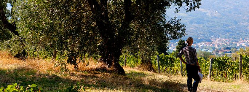 Billede fra en gåtur i på bjerge i Toscana. Smuk natur ses på billedet.